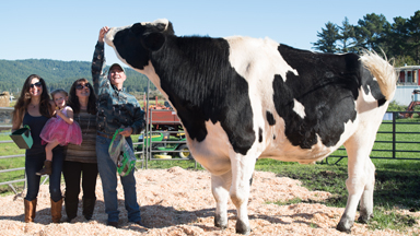 Humongous Holstein To Take Record For The World's Biggest Cow