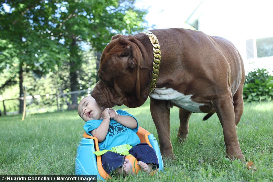 dog dynasty ep 5 hulk the babysitter