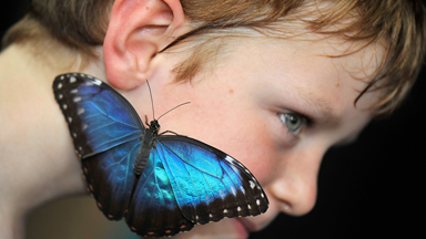 Spreading Their Wings: Butterfly Exhibit Opens