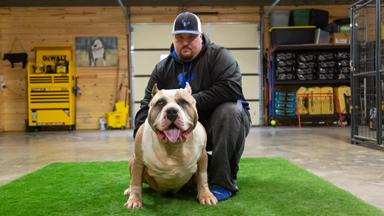 Huge 180lb Bully Challenges Dad's Record Weight