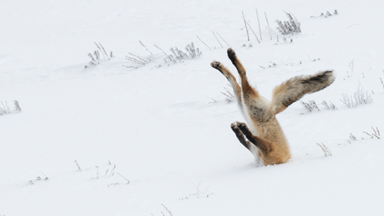 Finale: 2016 Comedy Wildlife Photography Awards Winners