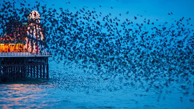 Startling Starlings: Thousands of Birds Fill The Sky In Stunning Formations