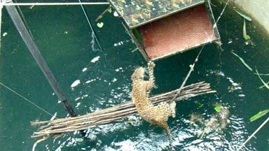 SNAPPED! Drowning Leopard Rescued From 60 Foot Well