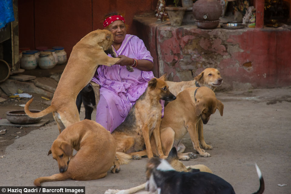 Puppy Love The Dog Lady Of New Delhi Cares For 400 Strays-2842
