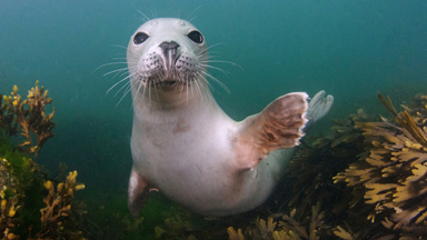 Flipping Happy! Playful Seals Frolic In British Waters