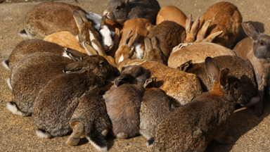 Hopping Mad: 'Rabbit Island' attracts thousands of animal lovers