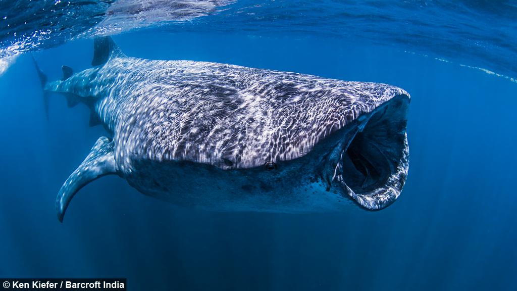 Big Mouth! Swimming Wi...
