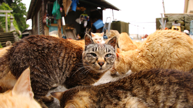 Cat Heaven: Japan's Cat Island Where Felines Outnumber Humans Six To One