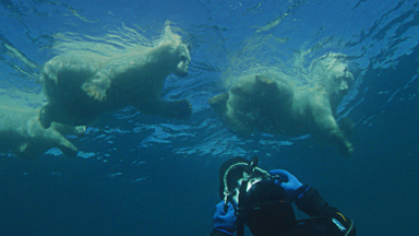 Photographer Swims With Wild Polar Bear Family