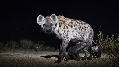 SNAPPED! Africa's nightlife in the wild uncovered