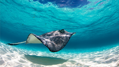 What Lies Beneath: Beautiful Photos Of Stingrays In The Cayman Islands