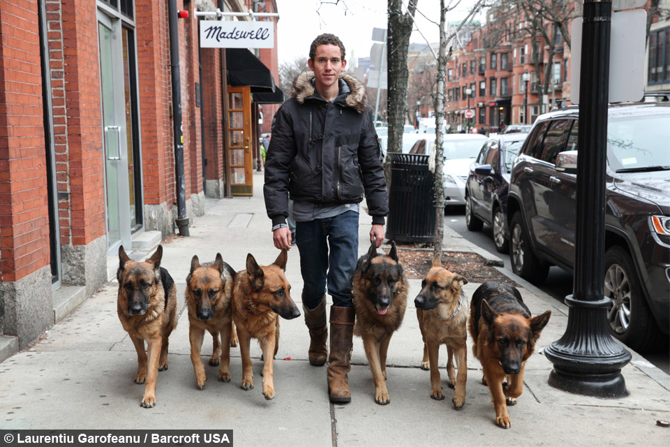 Leader Of The Pack Dog Whisperer Walks With Six Dogs