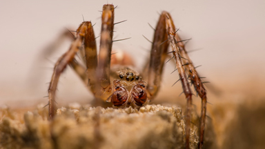 Amazing Arachnids: Explore the tiny world of spiders