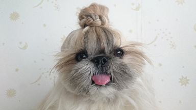 Hair of the Dog: Pooch Becomes Insta-famous