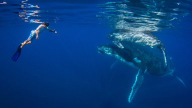 Kids Swim With 40 Tonne Whales
