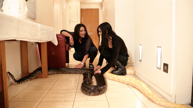 I Share My Bedroom With A 16ft Python