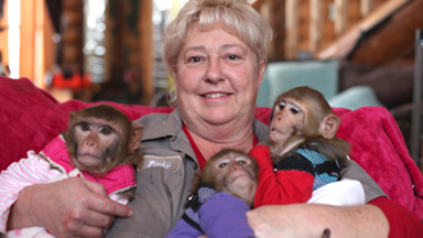 'Monkey Mum' is raising six primates in her house