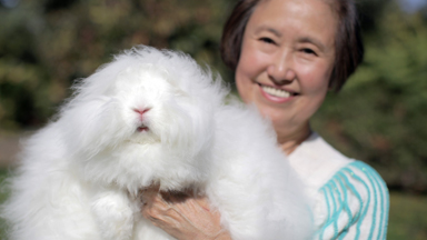 Good Hare Day: Woman Breeds World's Fluffiest Rabbits