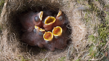 Birds Eye View: Patient photographer waits TEN YEARS for avian family