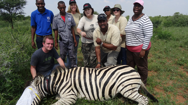 Zebra Saved From Deathly Snare Hold
