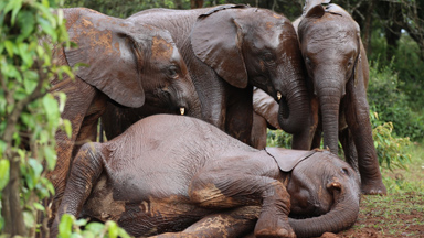 World Elephant Day: Orphaned baby elephants need 24 hour care