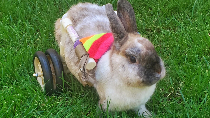 Roller Rabbit: Disabled bunny has a wheelchair