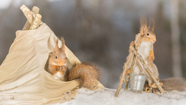 Family Portrait: Red Squirrels Captured On Camera In Mini Photoshoot