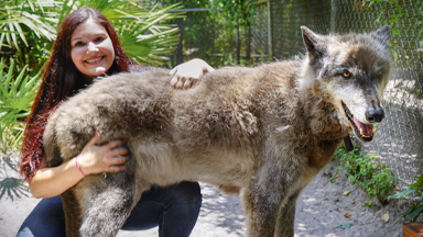 Yuki The Giant Wolf Dog