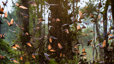 Bat's Incredible: Millions Of Bats Flock Across Africa For Annual Migration