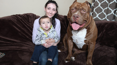 Monster Pit Bulls: Three-Year-Old Plays With Super-Sized Dogs