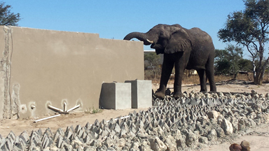 Caught On Camera Naughty Elephant Drinks Toilet Water