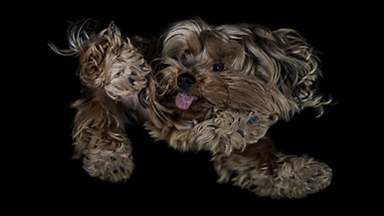 The Underdogs Project: Quirky Canines Strike A Pose
