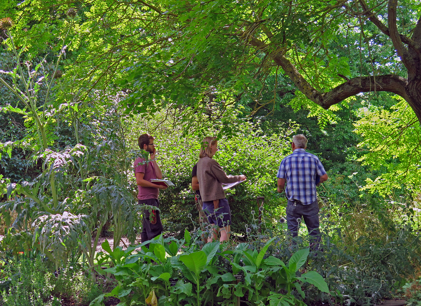 Group of Botanic Garden trainees and supervisor looking at trees.