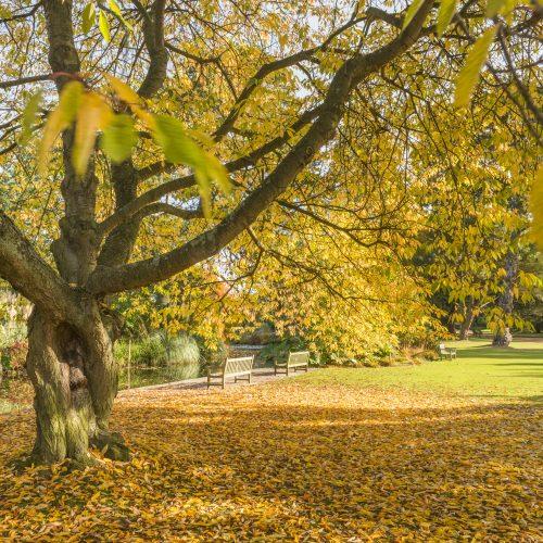 Cambridge University Botanic Garden remains open