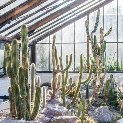 Caring for cacti and succulents over winter.