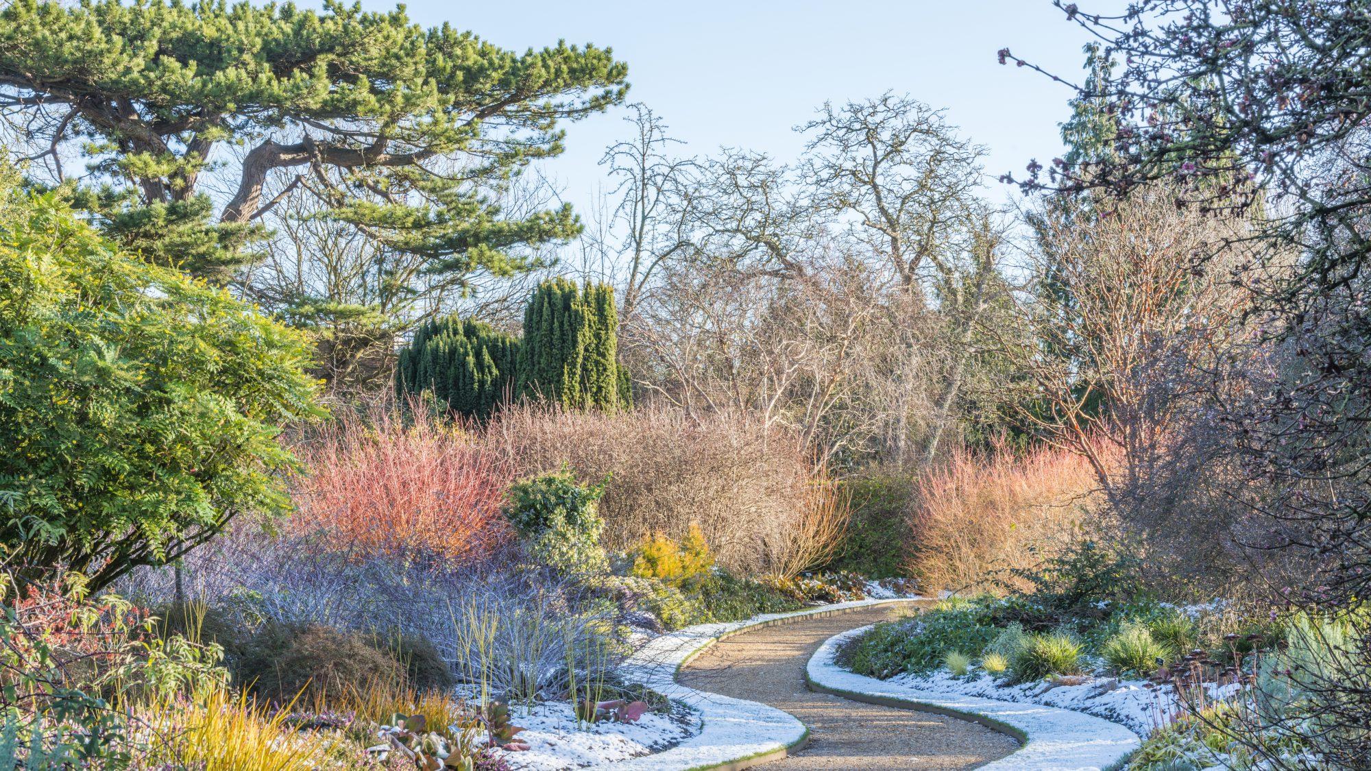 The Winter Garden at Cambridge University Botanic Garden showing multicolured trees, shrubs, foliage and flowers