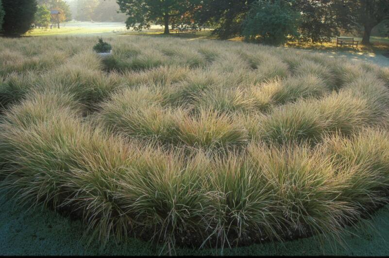 The grass maze in a celtic design.