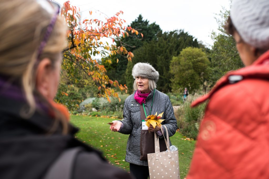 An autumn tour of the garden.