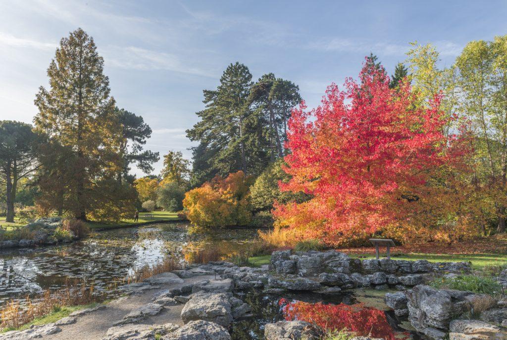 Autumn colour in the Rock garden.