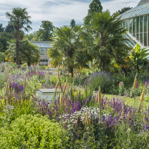 What's on this summer at CUBG  Copy