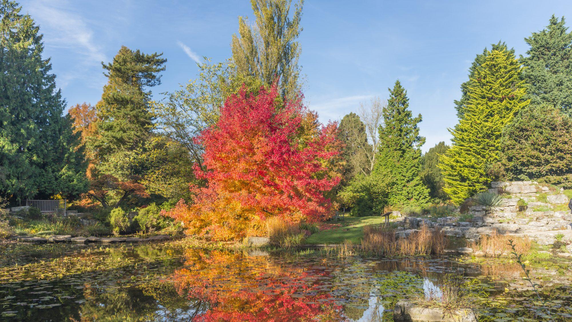 Autumn view in the Rock garden