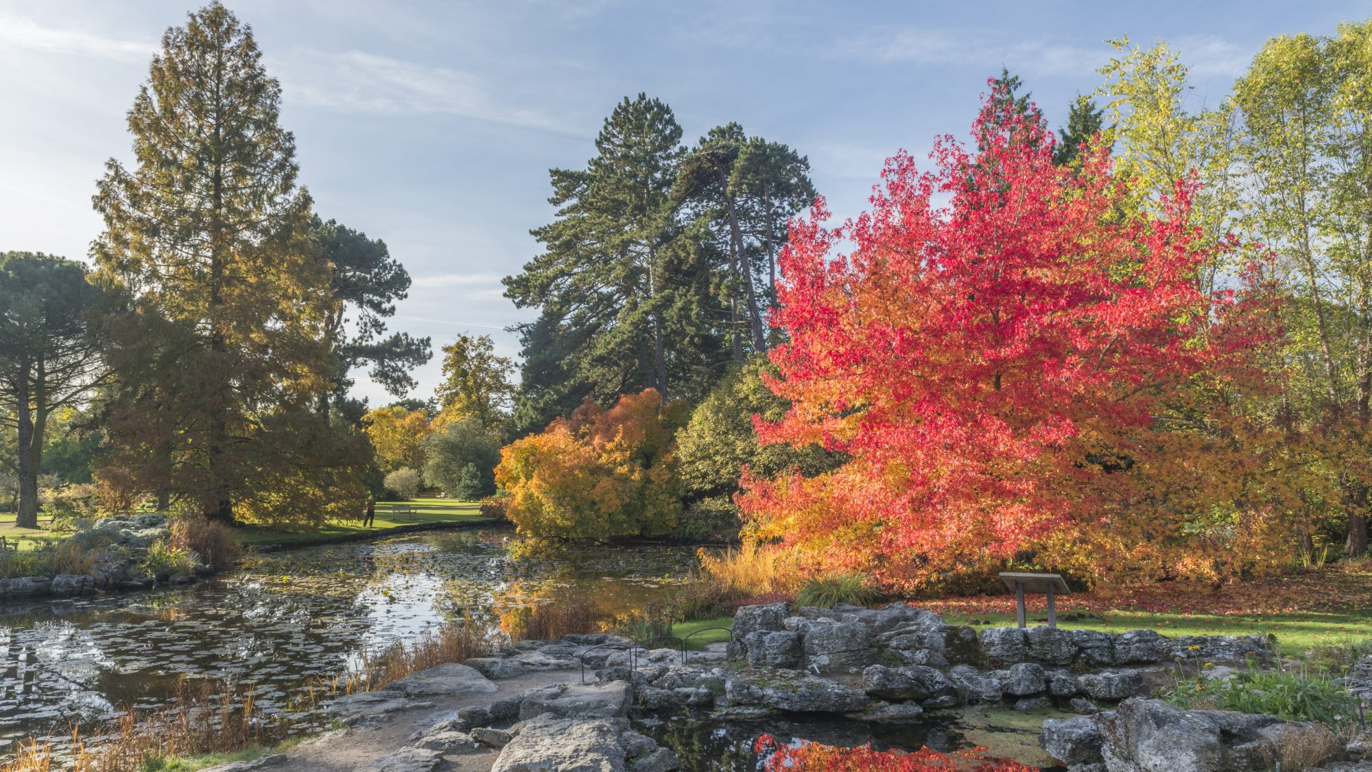 Autumn colours in the Rock garden.