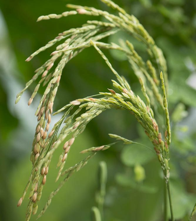 Plant Science Talks