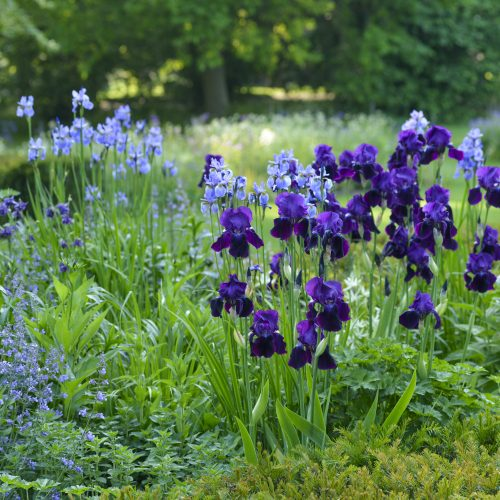 Merry Month of May as Garden records busiest May ever