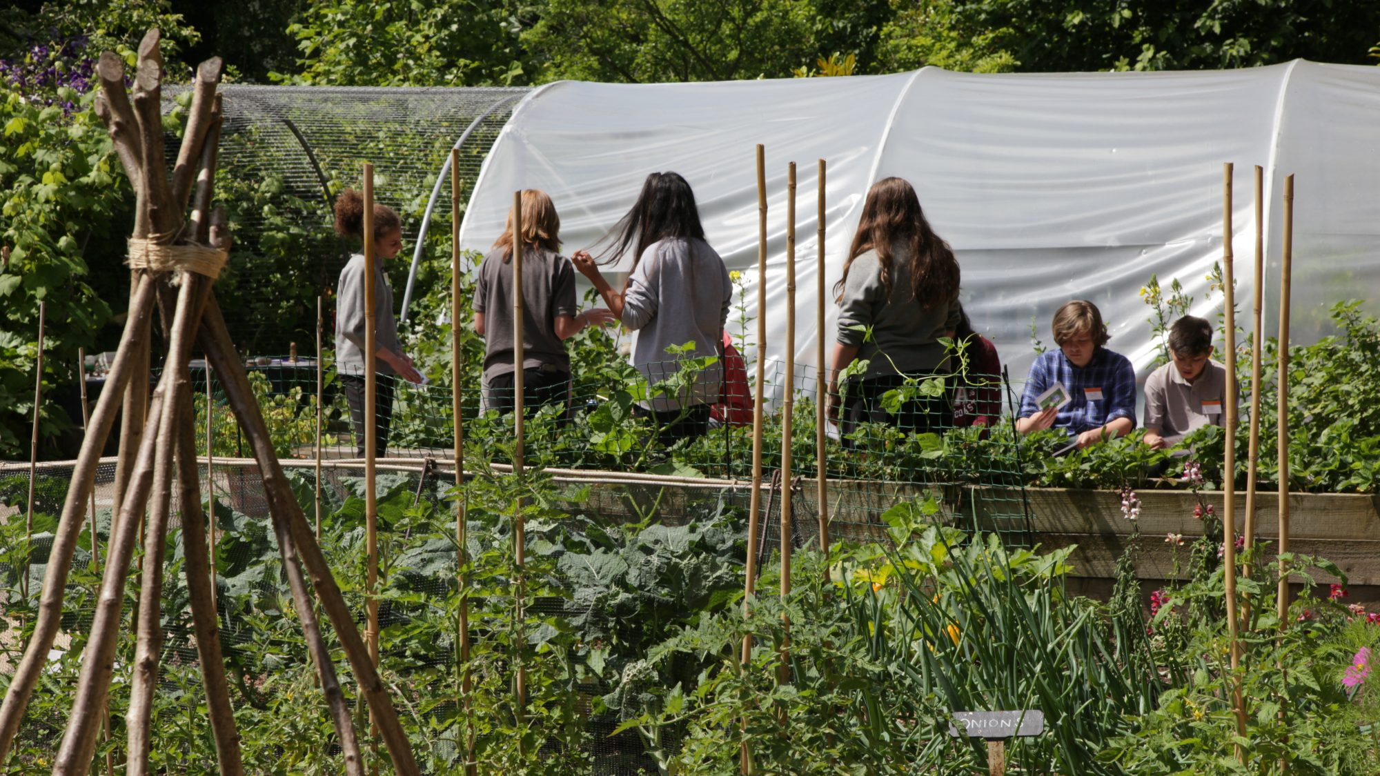 Students in the Schools' Garden with vegetables and polytunnel