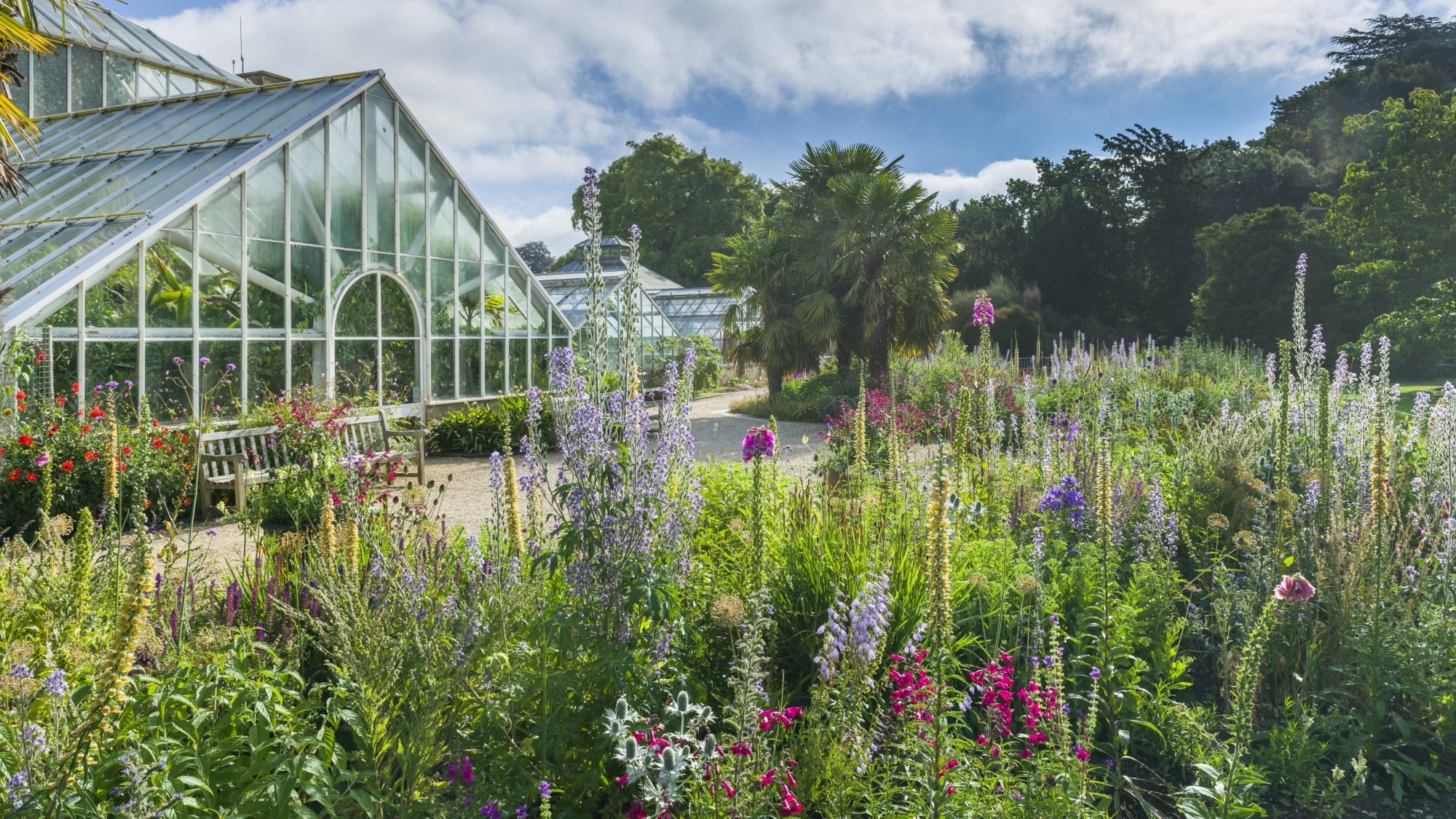 The Bee Borders in the hight of summer, overlooking the Glasshouse.