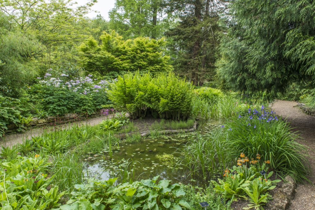 The Bog Garden is an oval pool surrounded by plants.