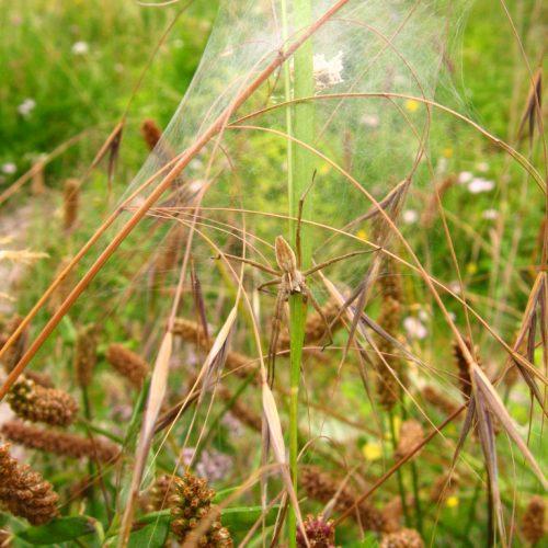 British Wild Plants