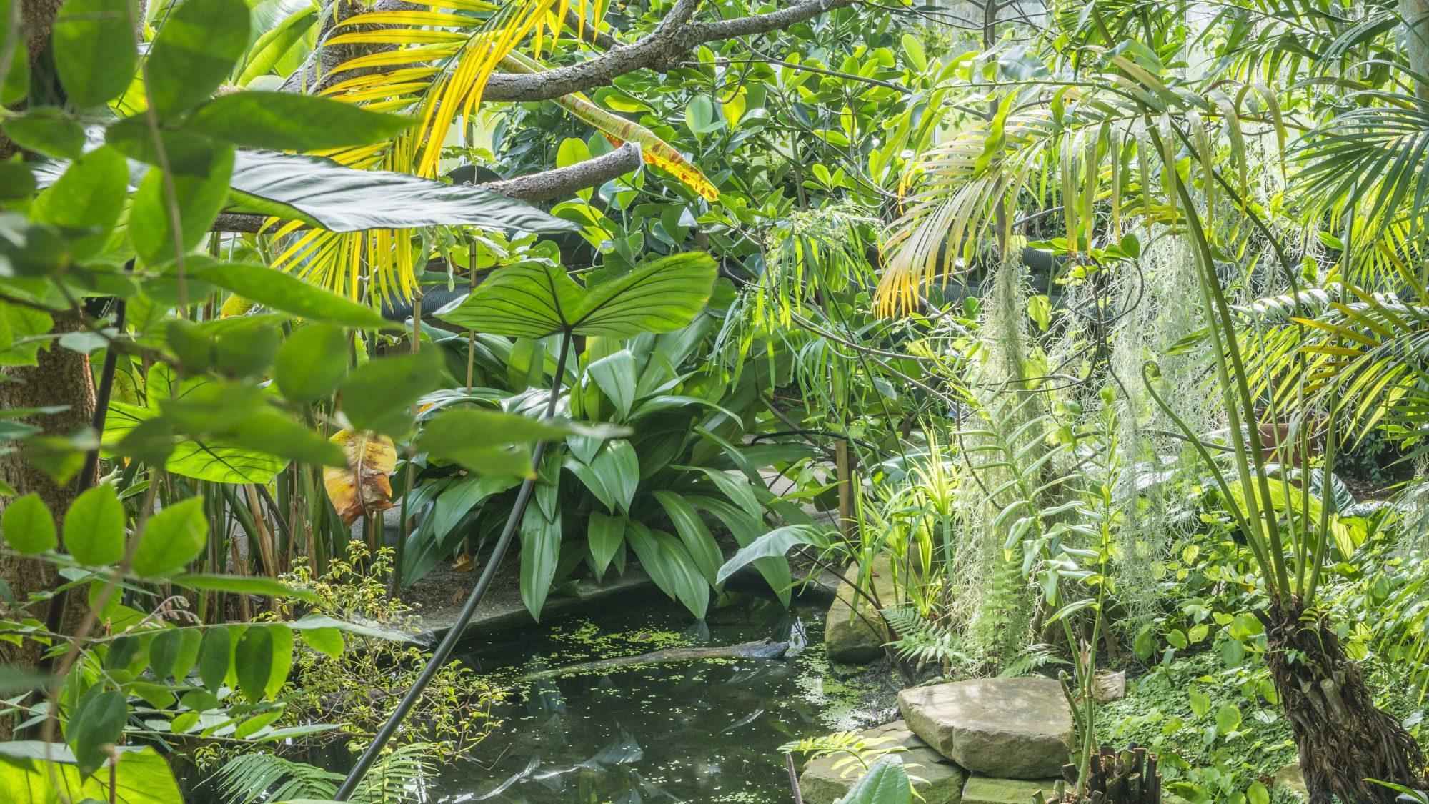 Tropical Rainforests Cambridge Botanic Garden