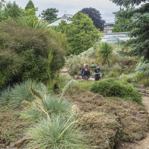Terrace Garden (New Zealand flora)